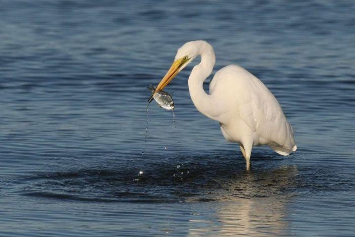 Cảnh báo nguy cơ nhiễm độc kháng sinh tại các vùng nước tự nhiên