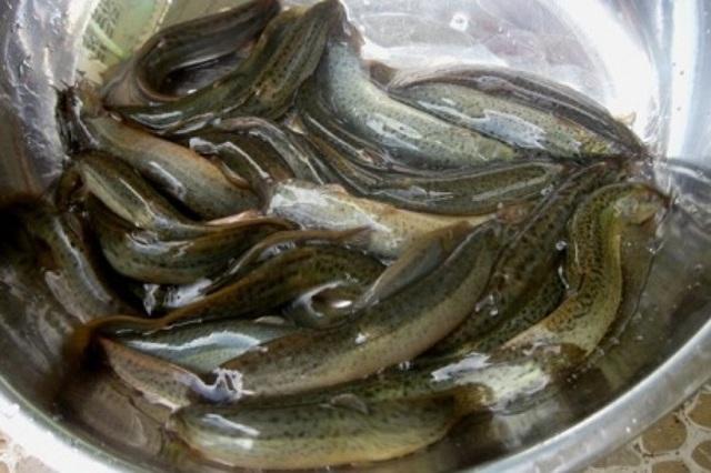 Loại cá giúp phái mạnh thêm sung